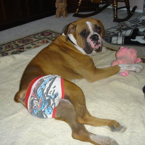 dog in underwear