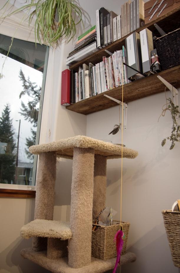 Studio cat-1.jpg