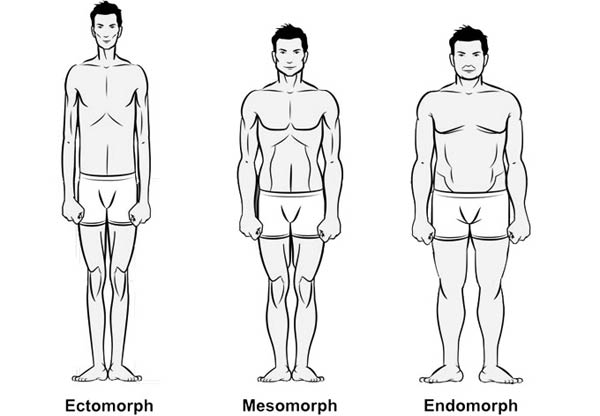 Endomorph-Mesomorph-Eectomorph